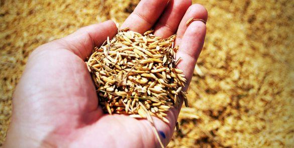 Agro & Agri Food
